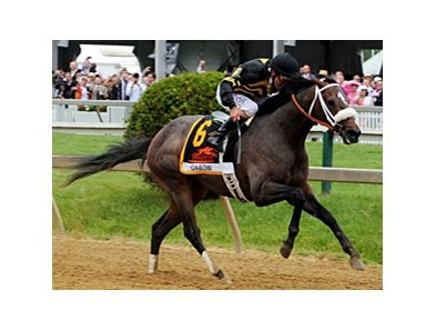 "Oxbow is expected to make his next start in the Haskell.<br><a target=""blank"" href=""http://photos.bloodhorse.com/TripleCrown/2013-Triple-Crown/Preakness-Stakes-138/29423277_98XmS6#!i=2527194199&k=Wss5Wsz"">Order This Photo</a>"