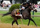 "Preakness winner Oxbow<br><a target=""blank"" href=""http://photos.bloodhorse.com/TripleCrown/2013-Triple-Crown/Preakness-Stakes-138/29423277_98XmS6#!i=2527194199&k=Wss5Wsz"">Order This Photo</a>"