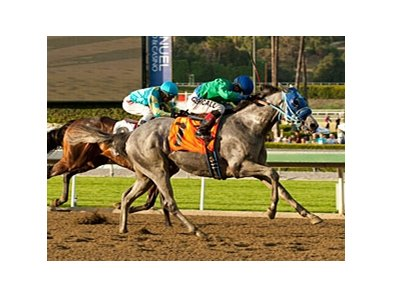 Creative Cause fights off Bodemeister to win the San Felipe Stakes.