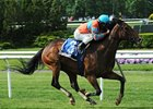 "Tannery won the Sheepshead Bay Stakes at Belmont Park May 25.<br><a target=""blank"" href=""http://photos.bloodhorse.com/AtTheRaces-1/at-the-races-2013/27257665_QgCqdh#!i=2534323868&k=gCFwj7G"">Order This Photo</a>"
