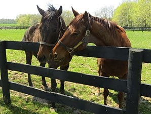 Brass Hat, left, and Groupie Doll, right.