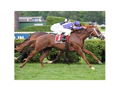 "Red Giant won this year's Fourstardave (gr. IIT) at Saratoga.  <br><a target=""blank"" href=""http://www.bloodhorse.com/horse-racing/photo-store?ref=http%3A%2F%2Fpictopia.com%2Fperl%2Fgal%3Fprovider_id%3D368%26ptp_photo_id%3D5403345%0D%0A%26ref%3Dstory"">Order This Photo</a>"