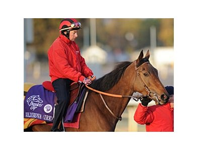 "Goldikova is ready to try for her third Breeders' Cup Mile win.<br><a target=""blank"" href=""http://www.bloodhorse.com/horse-racing/photo-store?ref=http%3A%2F%2Fpictopia.com%2Fperl%2Fgal%3Fprovider_id%3D368%26ptp_photo_id%3D9261568%26ref%3Dstory"">Order This Photo</a>"