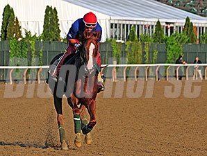 California Chrome - Belmont Park, June 3, 2014.