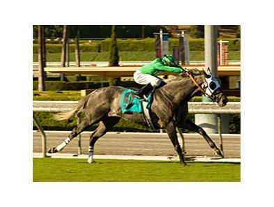 California Flag cruises to victory in the Morvich.
