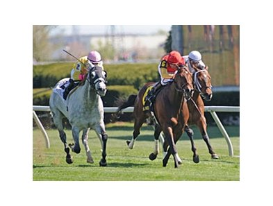 "Silver Timber captured his second consecutive graded stakes at Keeneland after taking the Shakertown. <br><a target=""blank"" href=""http://www.bloodhorse.com/horse-racing/photo-store?ref=http%3A%2F%2Fpictopia.com%2Fperl%2Fgal%3Fprovider_id%3D368%26ptp_photo_id%3D8885711%26ref%3Dstory"">Order This Photo</a>"