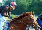 "Animal Kingdom at Belmont Park.<br><a target=""blank"" href=""http://www.bloodhorse.com/horse-racing/photo-store?ref=http%3A%2F%2Fpictopia.com%2Fperl%2Fgal%3Fprovider_id%3D368%26ptp_photo_id%3D9553319%26ref%3Dstory"">Order This Photo</a>"