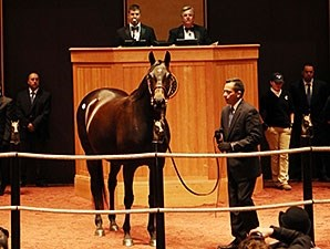 Sarah Lynx at the Fasig-Tipton November Sale.