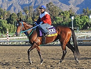 Street Girl - 2013 Breeders' Cup, October 29, 2013.