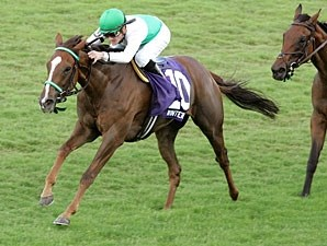 Winter View wins the 2009 All Along.