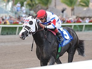 Bahamian Squall wins the 2012 Sunshine State Stakes.