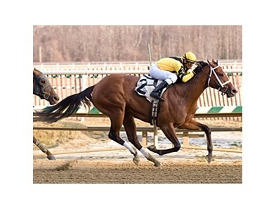 Saarland's daughter Saarlight won the Wide Country Stakes at Laurel on March 7.