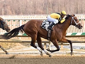 Saarlight wins the 2009 Wide Country Stakes