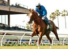 California Chrome works Nov. 23.