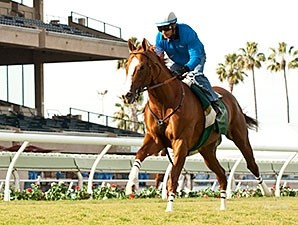 California Chrome breezes Nov. 23 at Del Mar.