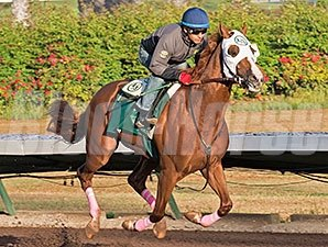 California Chrome - Los Alamitos, October 25, 2014.