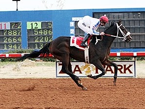 Ol Winedrinker Who wins the 2013 Zia Park Distance Championship Handicap.
