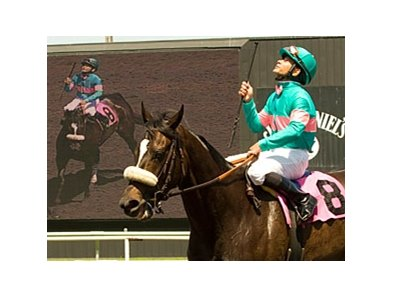 "Zenyatta has been pre-entered in both the Classic and the Ladies Classic. <br><a target=""blank"" href=""http://www.bloodhorse.com/horse-racing/photo-store?ref=http%3A%2F%2Fpictopia.com%2Fperl%2Fgal%3Fprovider_id%3D368%26ptp_photo_id%3D8279471%26ref%3Dstory"">Order This Photo</a>"