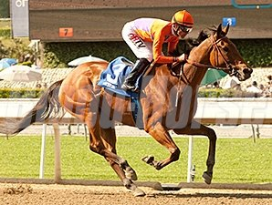 Beholder wins the Santa Lucia Stakes.