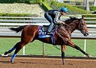 Champion American Pharoah Has First Work