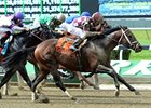 "Forty Tales has won 3 graded stakes in 2013.<br><a target=""blank"" href=""http://photos.bloodhorse.com/AtTheRaces-1/at-the-races-2013/27257665_QgCqdh#!i=2563024640&k=q5pL2cx"">Order This Photo</a>"