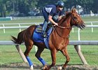 Coil Works Bullet, Will Start in Travers