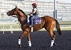 Little Mike at Meydan.