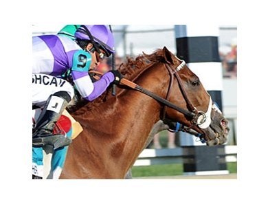"Approximately 8.1 viewers saw I'll Have Another win the Preakness.<br><a target=""blank"" href=""http://photos.bloodhorse.com/TripleCrown/2012-Triple-Crown/Preakness-Stakes-137/23013252_TrG3NS#!i=1856016041&k=ZTHMFMq"">Order This Photo</a>"