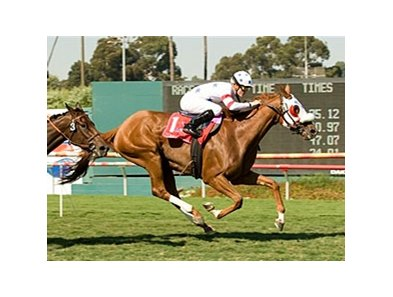 "American Oaks winner Pure Clan will not be participating in the Del Mar Oaks.<br><a target=""blank"" href=""http://www.bloodhorse.com/horse-racing/photo-store?ref=http%3A%2F%2Fpictopia.com%2Fperl%2Fgal%3Fprovider_id%3D368%26ptp_photo_id%3D5033293%26ref%3Dstory"">Order This Photo</a>"