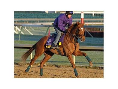 Pachattack jogging at Churchill Downs for the Breeders' Cup, sold for $1.2 Million at the Fasig-Tipton November Sale.