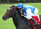 Summer Front Retired, to Stand at Airdrie