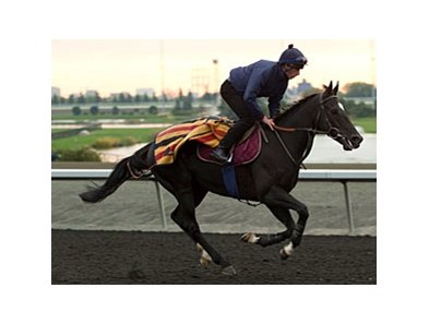 British-bred Dandino comes to Arlington for the American St. Leger.