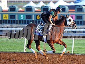 Mr. Z - Breeders' Cup 2014