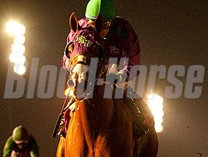 California Chrome wins the King Glorious Stakes.