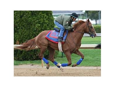 Adriano, with Edgar Prado up, works Adriano at Churchill Downs April 13.
