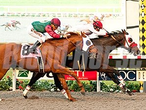 Big Macher wins the Cary Grant Stakes 11/23/2014.