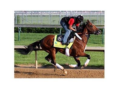 "Goldencents<br><a target=""blank"" href=""http://photos.bloodhorse.com/TripleCrown/2013-Triple-Crown/Kentucky-Derby-Workouts/29026796_jvcnn8#!i=2488102764&k=fLPbQLw"">Order This Photo</a>"
