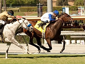 No Jet Lag wins the 2013 City of Hope.