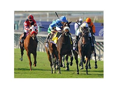"Flotilla (blue silks) sails home to win the Breeders' Cup Juvenile Fillies Turf.<br><a target=""blank"" href=""http://photos.bloodhorse.com/BreedersCup/2012-Breeders-Cup/Juvenile-Fillies-Turf/26130221_nMsRcw#!i=2191257428&k=639HMsN"">Order This Photo</a>"