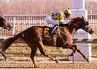 Dynamic Strike won the Miracle Wood Stakes Feb. 9.