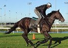 Court Vision checks out the Woodbine turf.