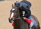 Rachel Alexandra got in her final pre-Fair Grounds Oaks workout March 8 at Oaklawn Park.