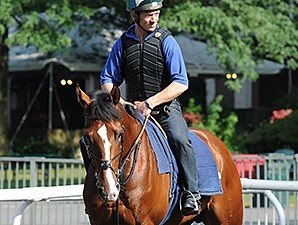 Toast of New York jogs at Belmont Park 7/3/2014.