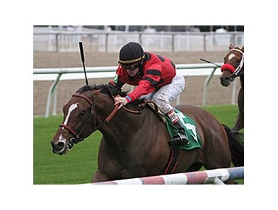 "String King won the Mr. Sulu Stakes Nov. 23 on the turf at Fair Grounds. <br><a target=""blank"" href=""http://photos.bloodhorse.com/AtTheRaces-1/at-the-races-2013/27257665_QgCqdh#!i=2926417407&k=8RcX3t9"">Order This Photo</a>"