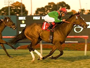 Gypsy's Warning wins the 2010 Matriarch.