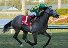 "Paddy O'Prado breaks his maiden in style in the Palm Beach Stakes.<br><a target=""blank"" href=""http://www.bloodhorse.com/horse-racing/photo-store?ref=http%3A%2F%2Fpictopia.com%2Fperl%2Fgal%3Fprovider_id%3D368%26ptp_photo_id%3D8825580%26ref%3Dstory"">Order This Photo</a>"