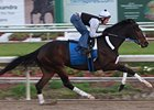 "Rachel Alexandra turned in her final workout before the March 13 New Orleans Ladies at Fair Grounds.<br><a target=""blank"" href=""http://www.bloodhorse.com/horse-racing/photo-store?ref=http%3A%2F%2Fpictopia.com%2Fperl%2Fgal%3Fprovider_id%3D368%26ptp_photo_id%3D8827584%26ref%3Dstory"">Order This Photo</a>"