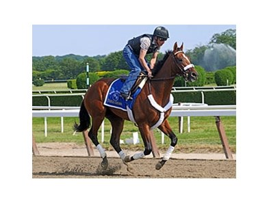 "Mucho Macho Man at Belmont Park<br><a target=""blank"" href=""http://www.bloodhorse.com/horse-racing/photo-store?ref=http%3A%2F%2Fpictopia.com%2Fperl%2Fgal%3Fprovider_id%3D368%26ptp_photo_id%3D9552004%26ref%3Dstory"">Order This Photo</a>"