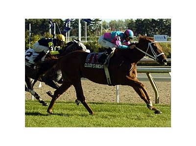 Cloudy's Knight heads the Stars and Stripes Handicap at Arlington Park July 4.