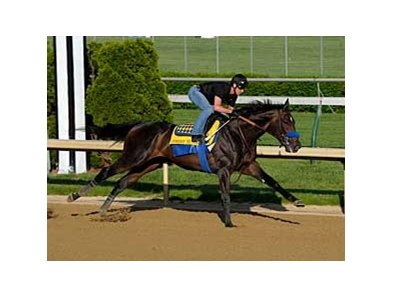 "Pioneerof the Nile put in a strong workout April 27 at Churchill Downs. <br><a target=""blank"" href=""http://www.bloodhorse.com/horse-racing/photo-store?ref=http%3A%2F%2Fgallery.pictopia.com%2Fbloodhorse%2Fgallery%2F81492%2Fphoto%2F8045147%2F%3Fo%3D2"">Order This Photo</a>"